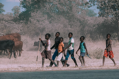 Dirty and poor Namibian children rearing cows