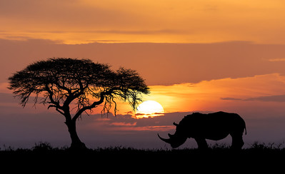 Namibia, Botswana, Zimbabwe & South Africa Wildlife