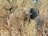 Elephant_Herd3