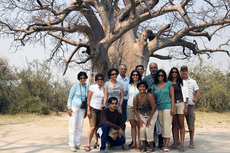 Giant_Baobab
