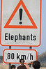 Elephant_Crossing