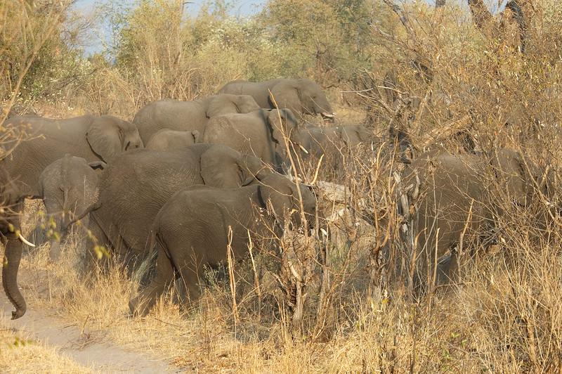 Elephant_Herd1