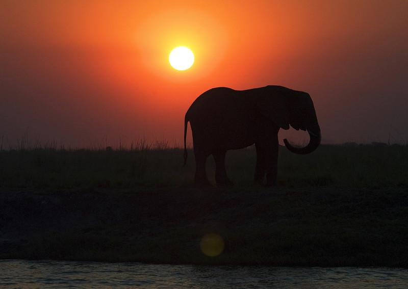 Elephants_at_Sunset3