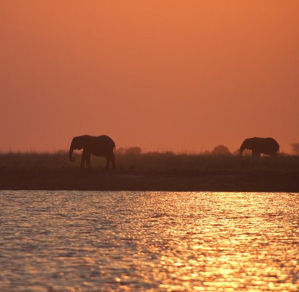 Elephants_at_Sunset1
