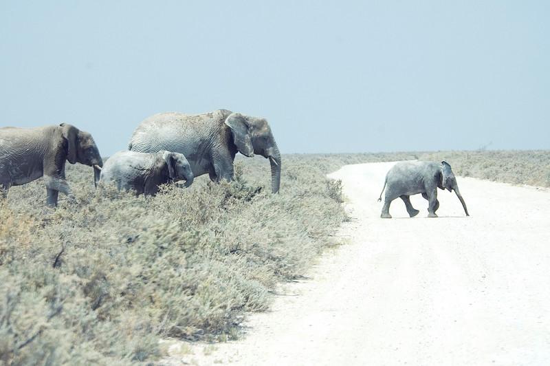 Elephant_Crossing1