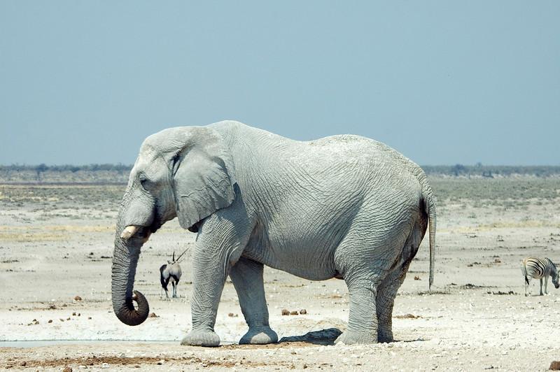Bull_Elephant1