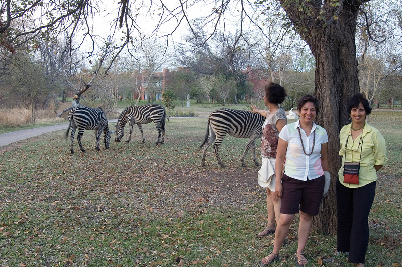 Zebra_at_Zambezi_Sun