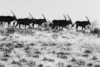 namibia, mariental, kalahari anib lodge, gondwana collection, game preserve, mammals, ungulates, oryx, sunset