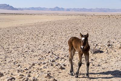 namibia, namib-naukluft np, sossusvlei, landscape, sand dunes, plants, acacia tree