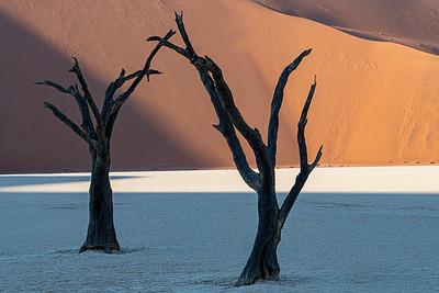 namibia, namib-naukluft np, deadvlei, landscape, sand dunes, plants, dead trees
