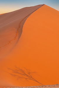 namibia, namib-naukluft np, sossusvlei, landscape, sand dunes, plants, acacia tree shadows, hikers, climbers, trails