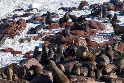 namibia; dorob np; cape cross seal colony; animals; mammals; pinnipeds; cape fur seals
