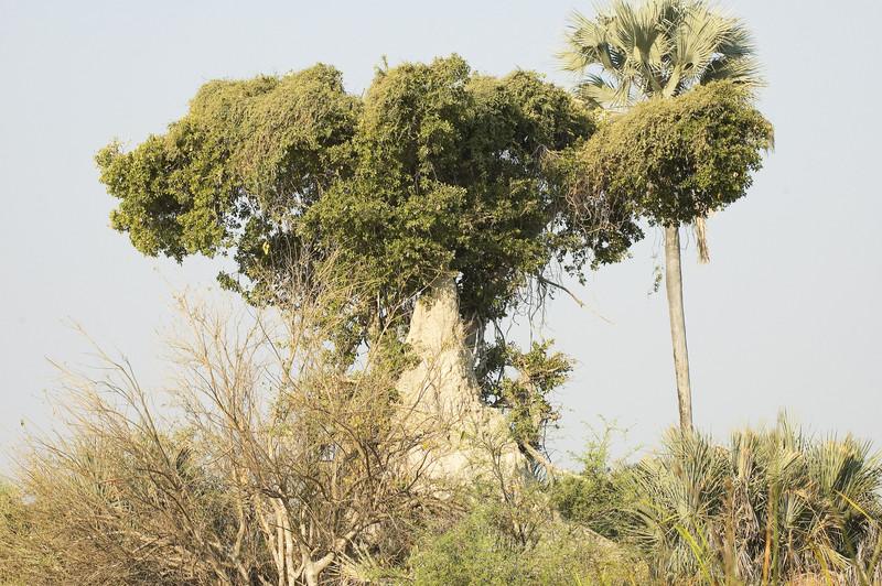 Termite_Hill