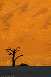 Sunrise at Dead Vlei - Enormous sand dunes overlooking a clay pan with 1000 year old dead trees !
