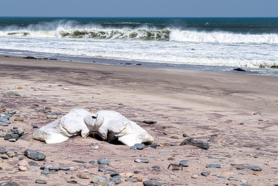 namibia, skeleton coast np, remains, whale skeleton, hip bone, sand, surf