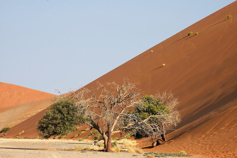 Dune45-2