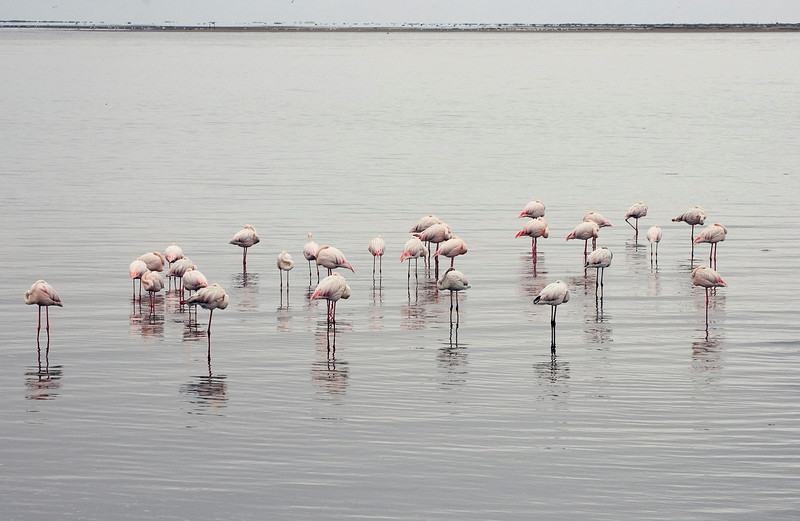 Sleepy_Flamingos