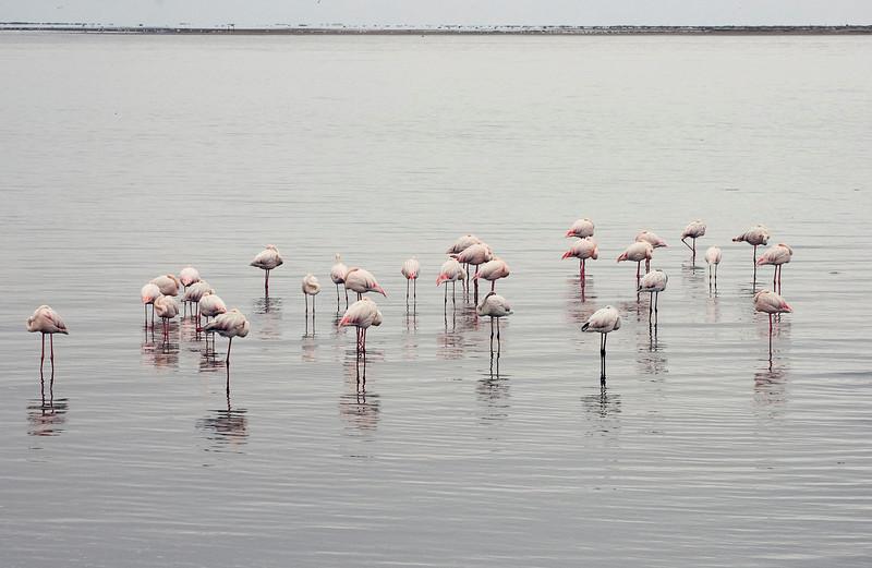 Sleepy_Flamingos