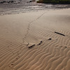 Porcupine tracks near the Skeleton Coast Camp