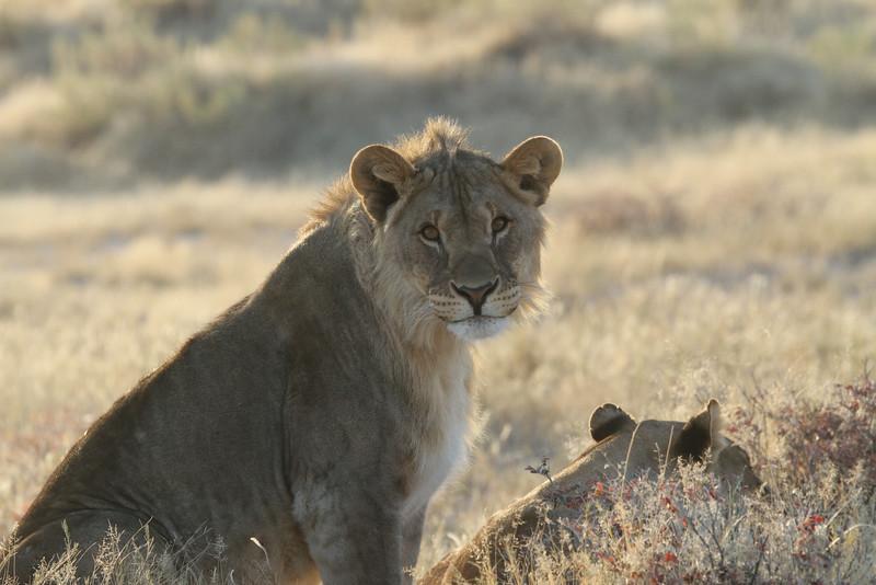 Young male near Okondeka waterhole