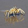Ghost Crab on the Skeleton Coast