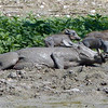 658 Warthogs, Anderssons Camp