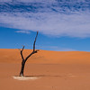 The lonely tree at Sossusvlei