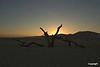 tree_scheleton_at_sunset