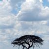 574 Etosha National Park