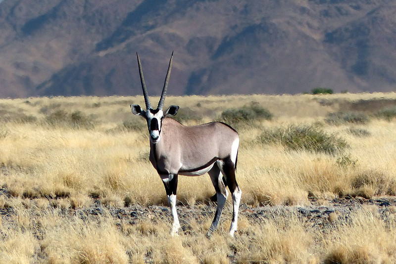 177 Oryx, Namib desert