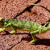 690 Chameleon, Anderssons Camp