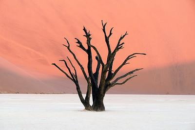Mia's Tree