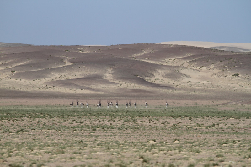 Gemsbok through the heat haze in the Skeleton Coast Park
