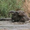 Desert-adapted Elephants in Damaraland.  The young ones had a great time in the water after the herd had drunk their fill