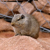 454 Twyfelfontein, Damaraland