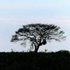549 Etosha National Park
