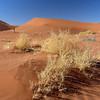 134 Sossusvlei Sand Dunes