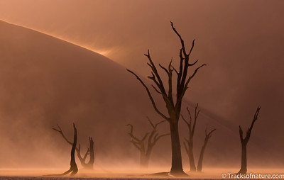 Deadvlei sand storm, Namib-Naukluft National Park