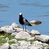 569 Etosha National Park