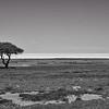 The lonely tree at the Etosha pan