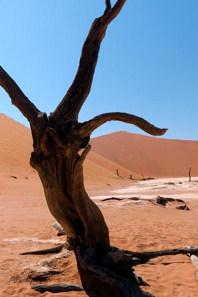 142 Sossusvlei Sand Dunes
