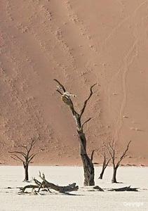 dead_trees