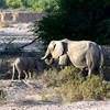 419 Desert Elephants, Damaraland