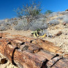 434 Petrified Forest, Damaraland