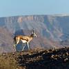 088 Springbok, Namib Desert