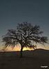 tree_at_sunset