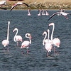 263 Flamingos, Road to Cape Cross