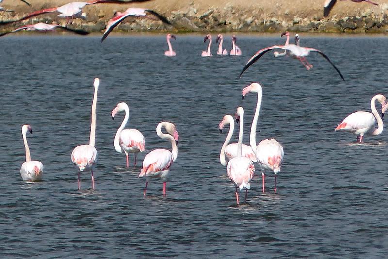 263 Flamingos, Road to Cape Cross