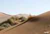 sand_dunes_6