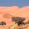Namibia07-0220